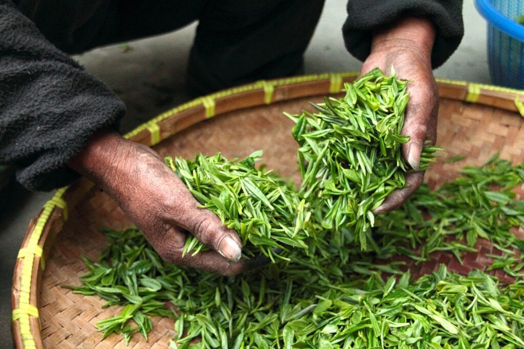 tea, hand, fresh